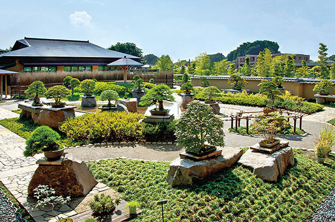 bonsai gardens. private tour to garden in tokyo and omiya bonsai village gardens