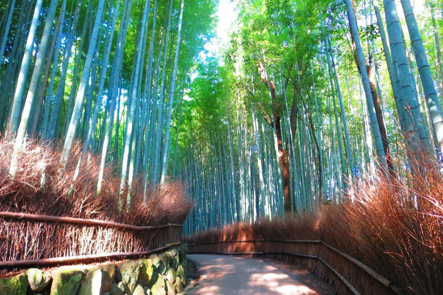 Bamboo-Kyoto-Private-Tour.jpg