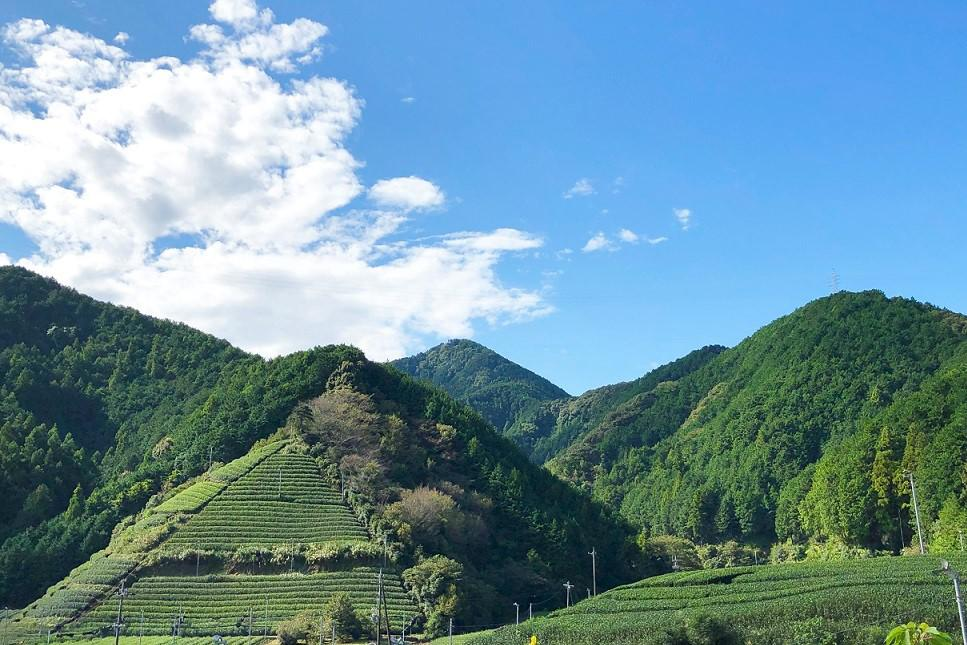 Shizuoka_Private_Tour_Green_tea_field.jpeg
