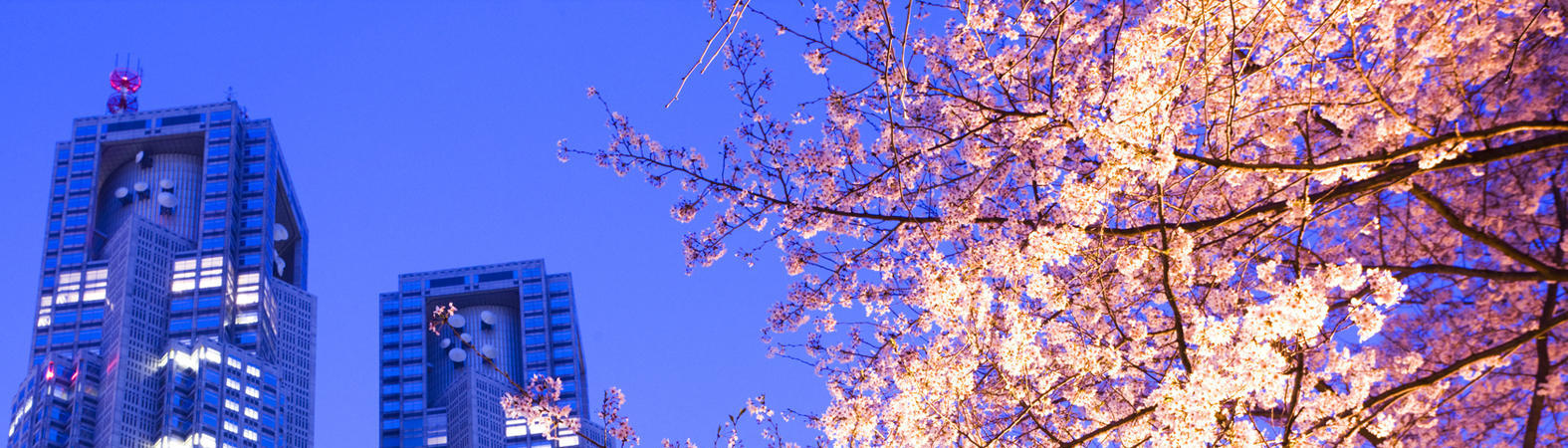 Japan Travel Experts Specializing in Creating Tailor-Made Itineraries